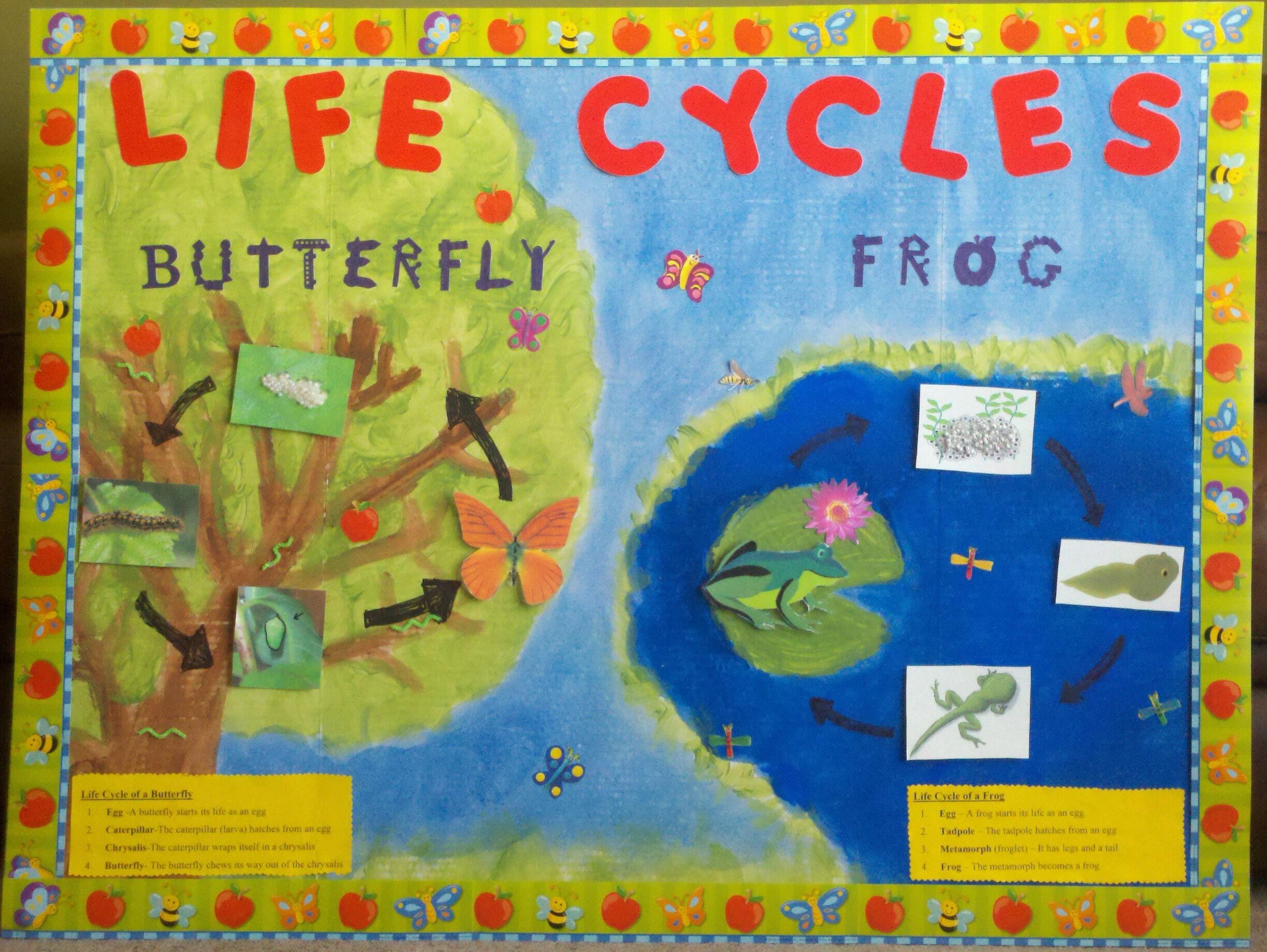 Spring Bulletin Board Ideas