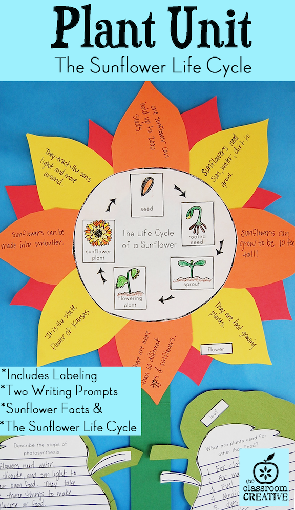 plant unit science life cycle sunflower