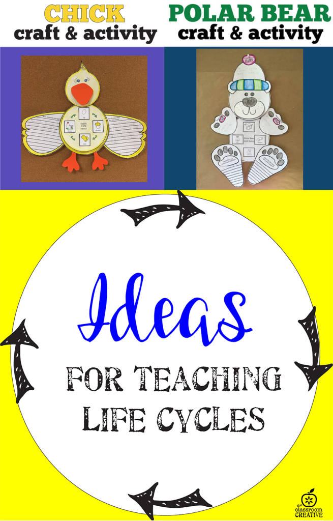 life cycle activities for fall, winter, spring, summer