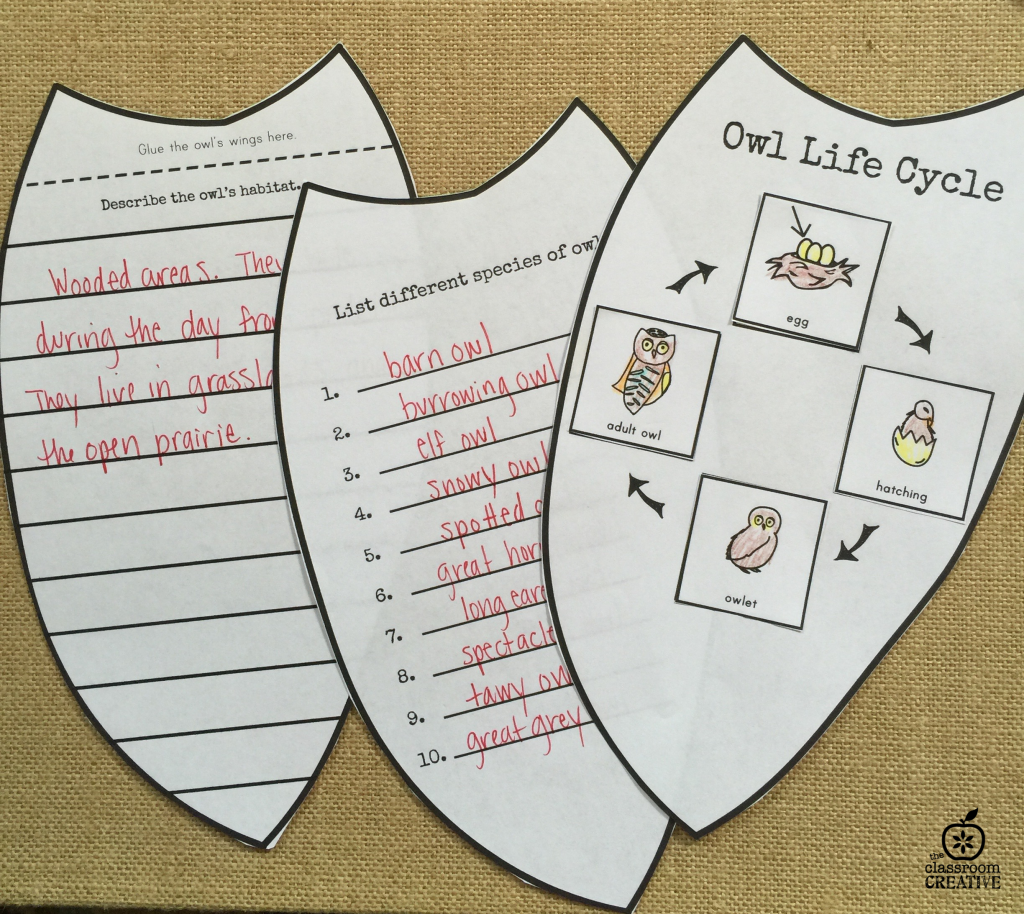owl science life cycle activity