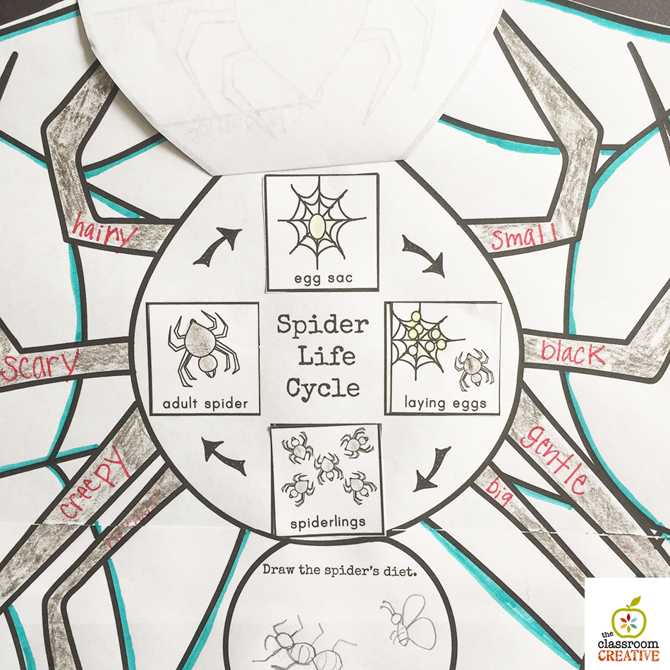 spider unit labeling activity