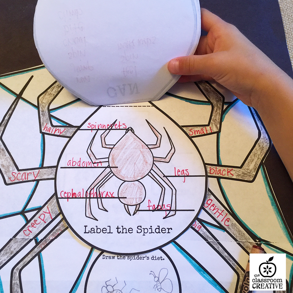 spider unit spider life cycle activity